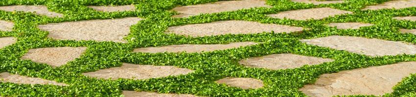 بذر چمن اسپرت