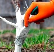 محافظ تنه و چسب باغبانی