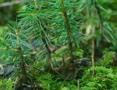 درخت و درختچه های غیر مثمر