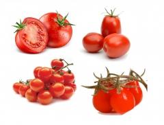نشاء گوجه