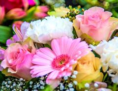 بذر گل و گیاهان زینتی