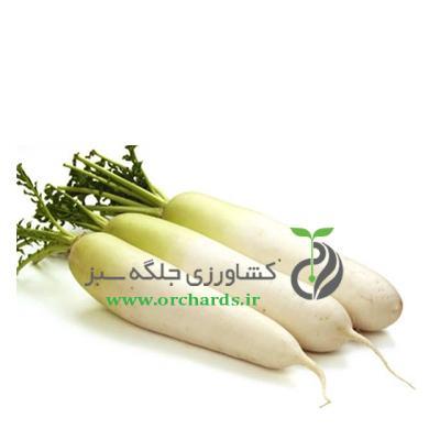 بذر ترب سفید bio seeds