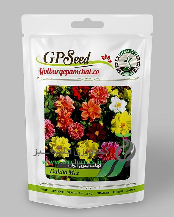 بذر گل کوکب بذری پا متوسط الوان گلبرگ پامچال