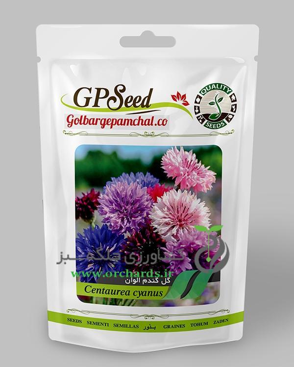 بذر گل گندم پا متوسط الوان گلبرگ پامچال