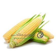 بذر ذرت شیرین (پک 1 کیلوگرمی)