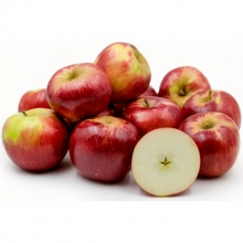 نهال سیب گالا ریشه لخت