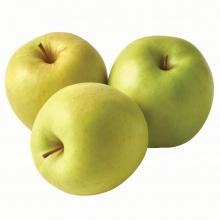 نهال سیب لبنانی زرد (گلدن دلیشز) ریشه لخت