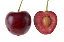 نهال گیلاس تکدانه (پایه رویشی) - Single-seeded cherry seedlings