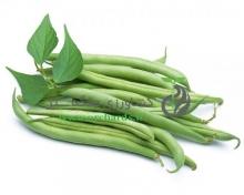 بذر لوبیا هِد ( Hed ) بسته 1 کیلوگرمی