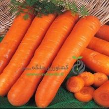 بذر هویج هورتی کولا