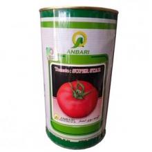 بذر گوجه فرنگی سوپراستار عنبری