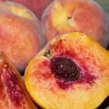 Peach seedlings GH Hill seed base