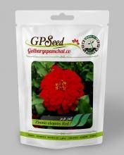 بذر گل آهار قرمز گلبرگ پامچال