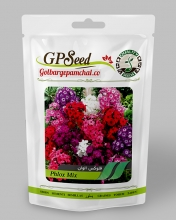 بذر گل فلوکس الوان گلبرگ پامچال