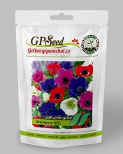 بذر گل شقایق نعمانی الوان گلبرگ پامچال
