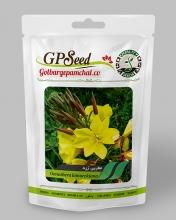 بذر گل مغربی پا بلند زرد گلبرگ پامچال